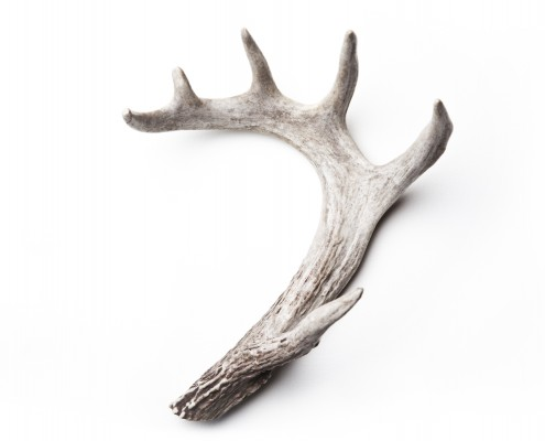 Antler // OBJECT SERIES