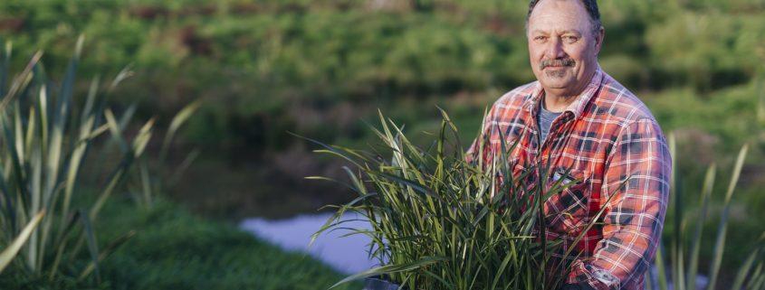 Riparian planting // NORTHLAND REGIONAL COUNCIL